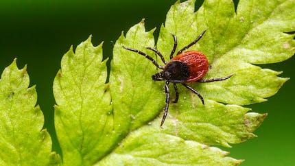 """Comprendre le """"plan maladie de Lyme"""" en 3 points"""