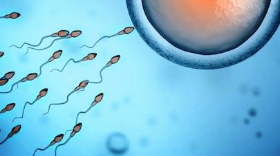 Les spermatozoïdes aiment l'hiver!
