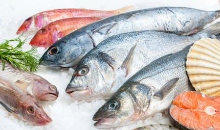 Maladie de Charcot: le risque des poissons contaminés au mercure