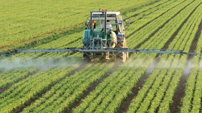 Glyphosate : la question de sa dangerosité se pose une nouvelle fois