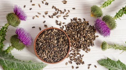 Milk thistle, a plant that protects the liver |  Health Magazine