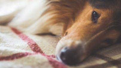 Partager son lit avec un animal de compagnie: quels sont les risques?