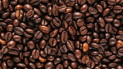 Café: pas plus de quatre tasses par jour pour éviter les effets indésirables