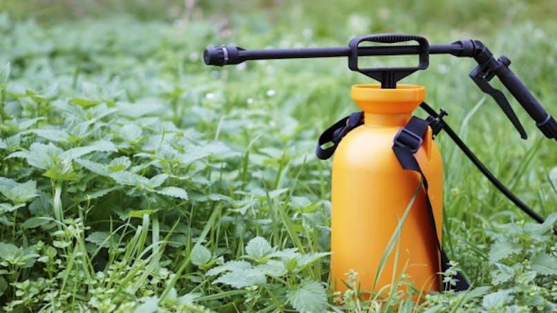 Maladies neurodégénératives: les pesticides augmentent le risque de SLA