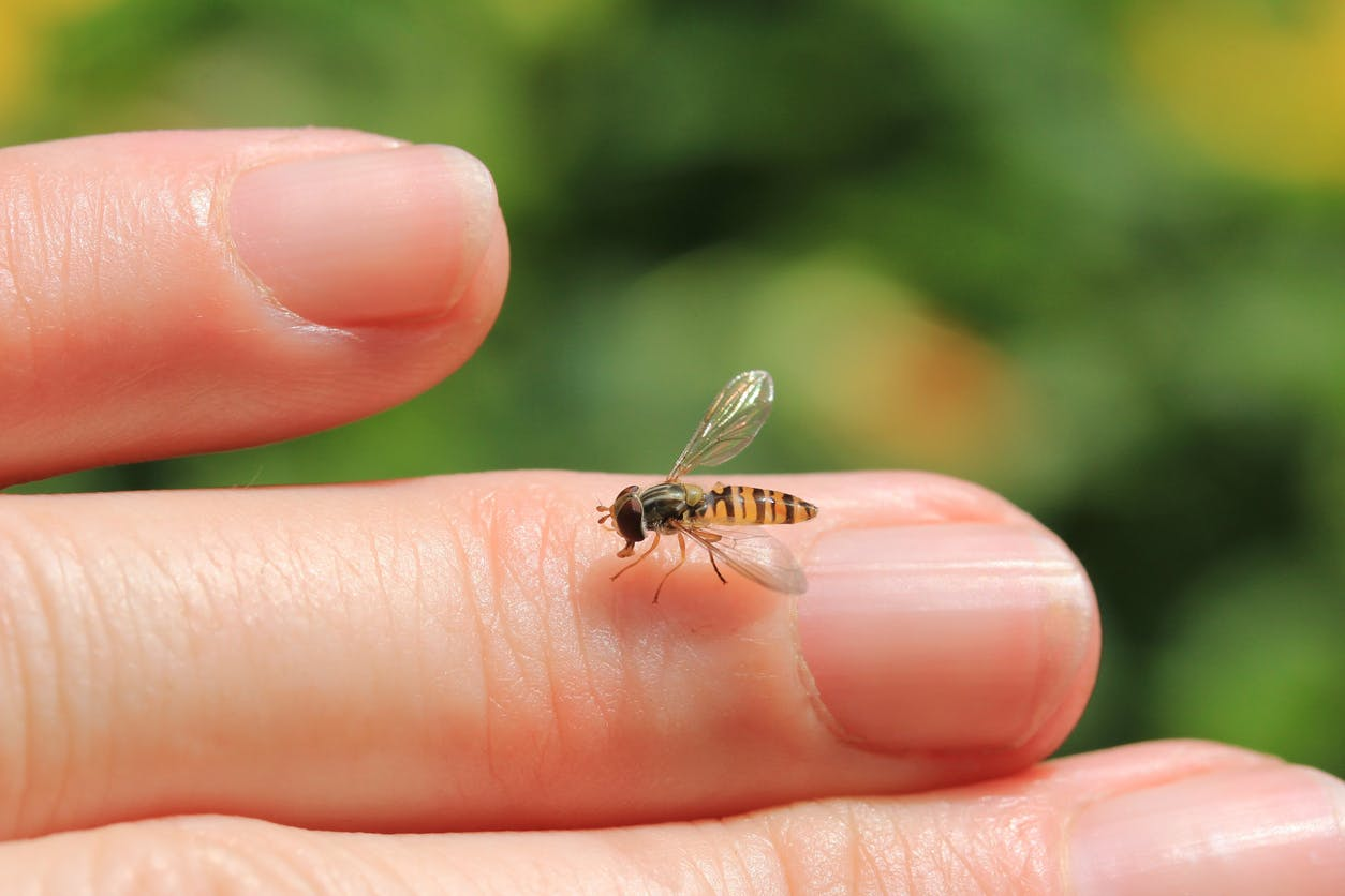 Piqûres d'insectes et d'acariens : comment les soigner