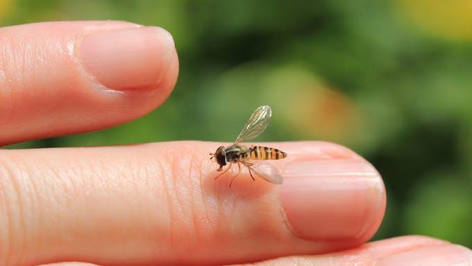 Piqûres d'insectes et d'acariens: comment les soigner