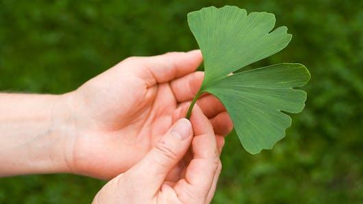 Maladie de Lyme et médecines douces: quelles solutions pour les patients?