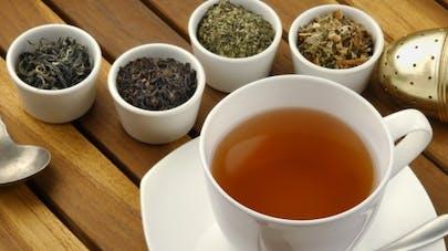 Comment le thé vert et le thé noir agissent sur la santé