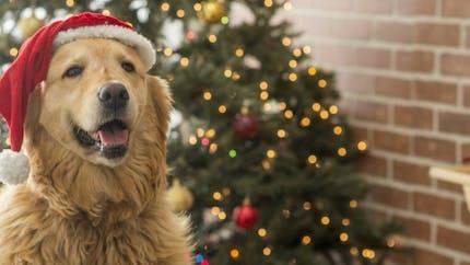 Protégez votre chien des intoxications pendant les fêtes