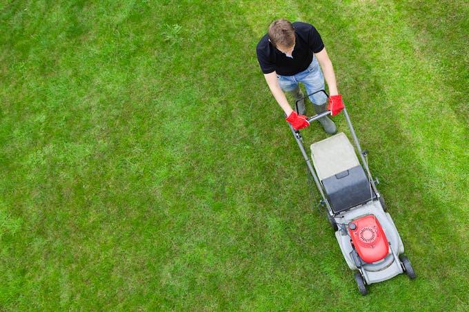Les personnes allergiques aux graminées doivent éviter de tondre la pelouse