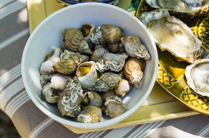 Bulot et bigorneau, des coquillages bon marché