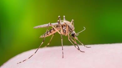 Prévention du paludisme: le Lariam sous surveillance renforcée
