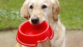 Comment la gamelle du chien peut influencer notre santé