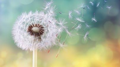 Traitement de l'allergie : comment se passe la désensibilisation ?