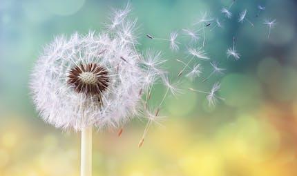 Traitement de l'allergie: comment se passe la désensibilisation ?