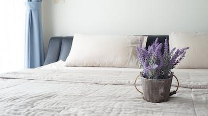 La lavande aide-t-elle vraiment à mieux dormir ?