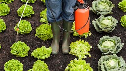 Pesticides et infertilité : une nouvelle étude confirme le lien
