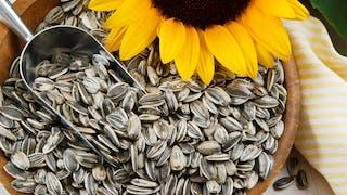 Graines de tournesol : les pipasols font-elles grossir ?