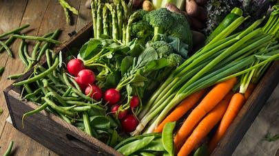 Bienfaits des légumes primeurs