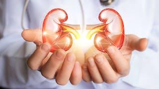 Hypertension, diététique, médicaments: comment préserver ses reins