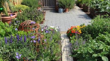 Créez votre propre jardin médicinal!