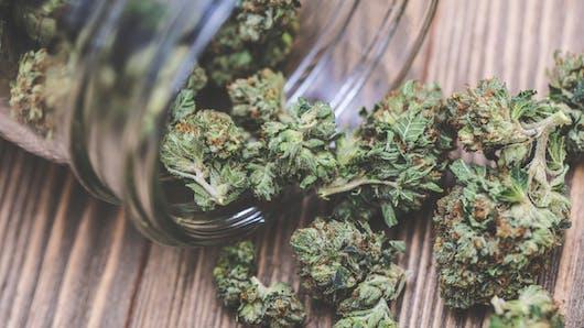 Cannabidiol (CBD), cannabis thérapeutique : ce qui est autorisé, ce qui ne l'est pas