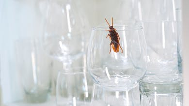 Quels insecticides naturels contre les fourmis, les poux, les moustiques ?
