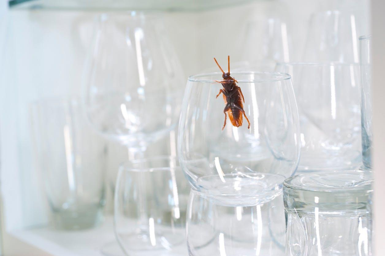 Faire Fuir Les Fourmis choisir un insecticide naturel | santé magazine