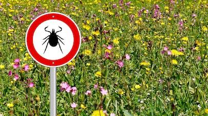 Maladie de Lyme: la Haute autorité de santé fixe la conduite à tenir