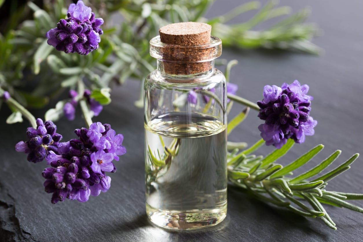Lavender essential oil: benefits & indication of officinal lavender |  Health Magazine