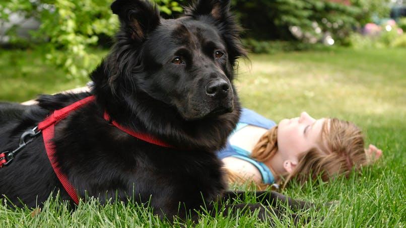 Diabète : des chiens formés en France pour aider à le détecter et à le traiter
