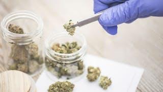 Cannabis thérapeutique: des élus et médecins demandent sa légalisation