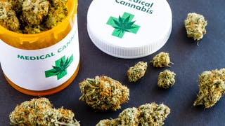 Cancer du pancréas : le cannabis pour augmenter la survie