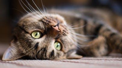 4 bonnes raisons d'adopter un chat
