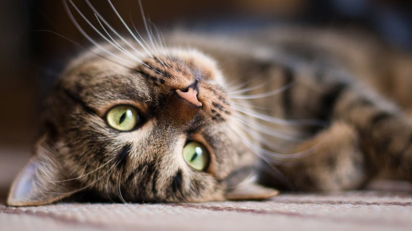 4 bonnes raisons d'adopter un chat