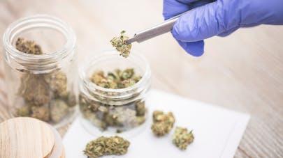 MICI : l'efficacité du cannabis thérapeutique démontrée