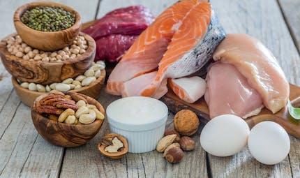Quelle est la différence entre protéines animales et végétales ?