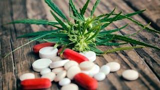 Le cannabis, un vrai médicament?