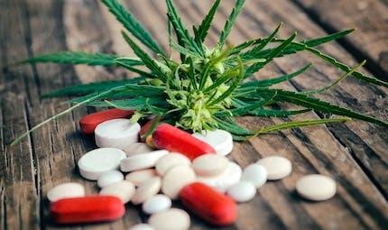 Le cannabis est-il un vrai médicament?