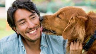 Chiens et chats : leur salive pas si anodine