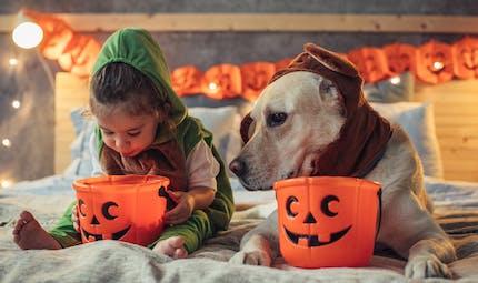 Comment protéger les animaux le soir d'Halloween