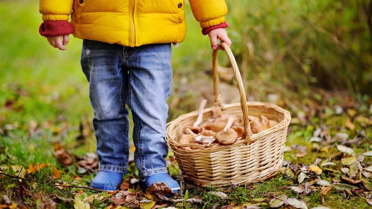 9 conseils pour une cueillette des champignons sans risque