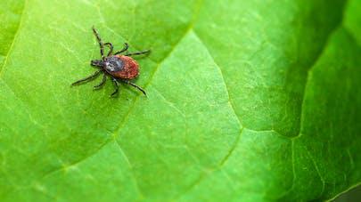 Maladie de Lyme : une femme atteinte porte plainte contre un médecin