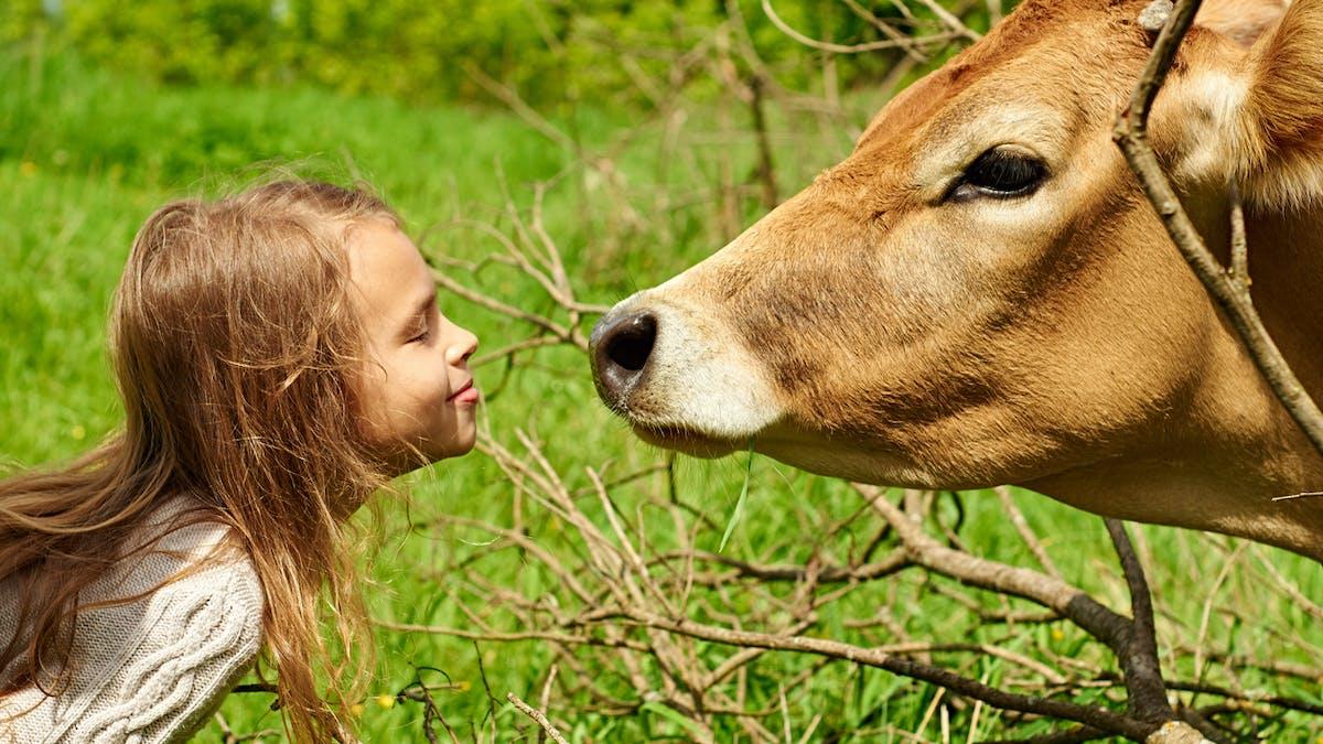 fillette et vache