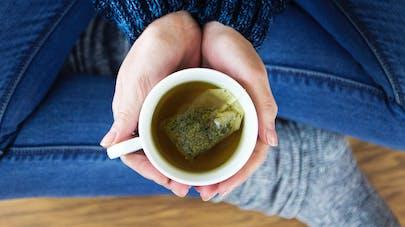 Thé vert : un effet anti-obésité grâce à son action sur le microbiote
