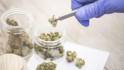 Les variétés de cannabis les plus fortes sont liées à des taux de psychose plus élevés