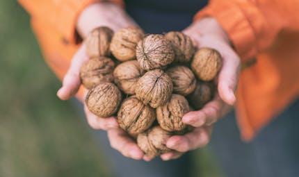 Une poignée de noix chaque jour pour prendre soin de sa santé cognitive