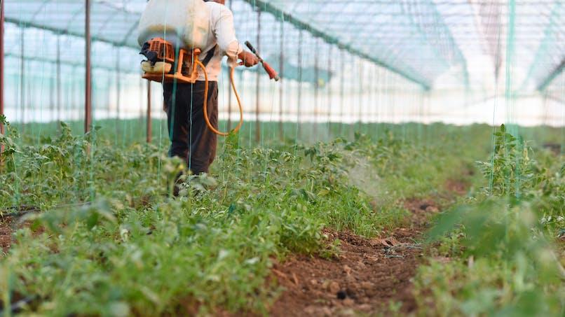 Glyphosate: nouvelle amende record aux Etats-Unis