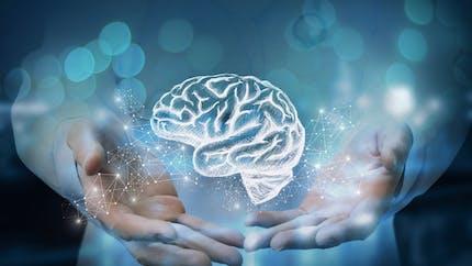 Cerveau droit, cerveau gauche: comment ça marche?