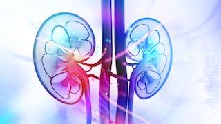 A quoi servent les reins dans l'organisme ?